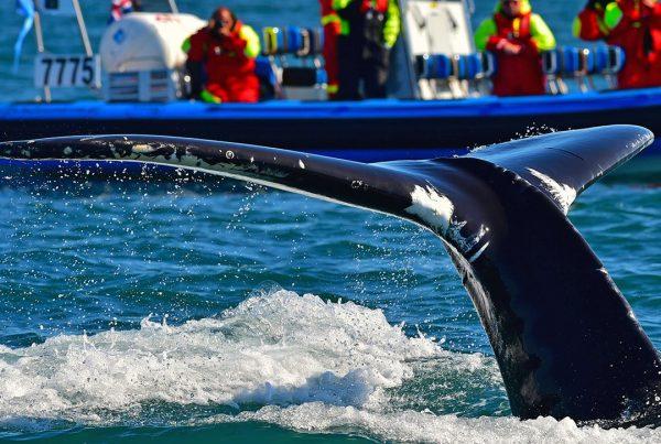 rib-boat-husavik-whale-watching-tour-03