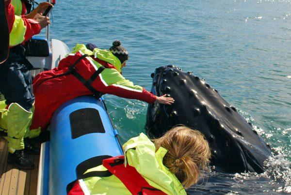 rib-boat-husavik-whale-watching-tour-04