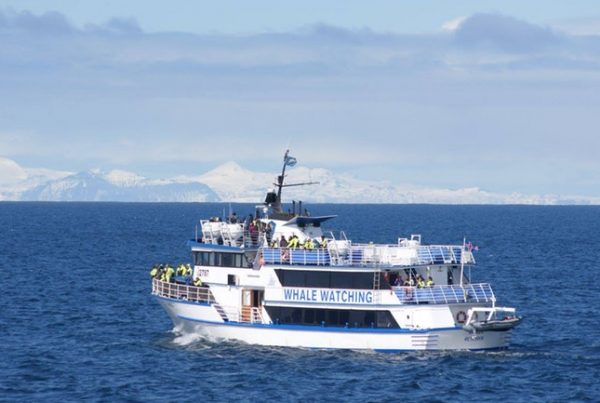whale-watching-reykjavik-01