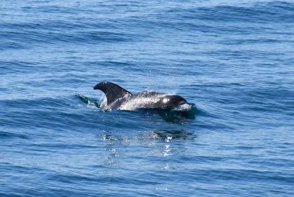 whale-watching-reykjavik-02