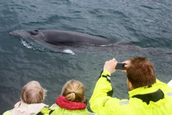 whale-watching-reykjavik-05