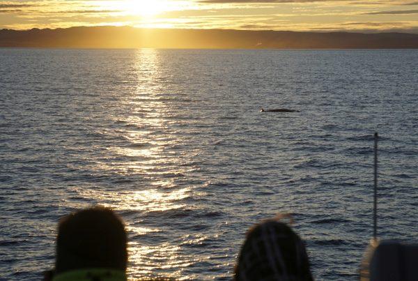 midnight-sun-whale-watching-tour-06