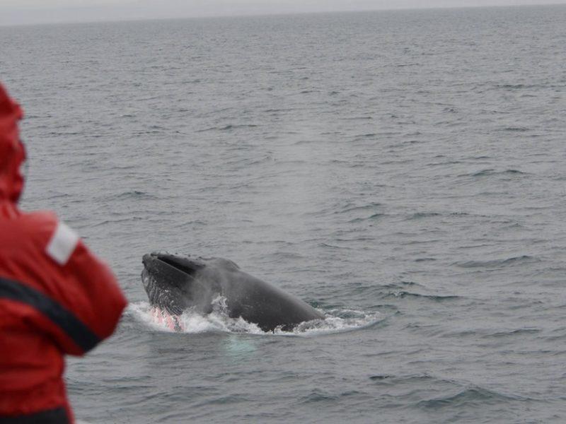 akureyri-classic-whale-watching-02
