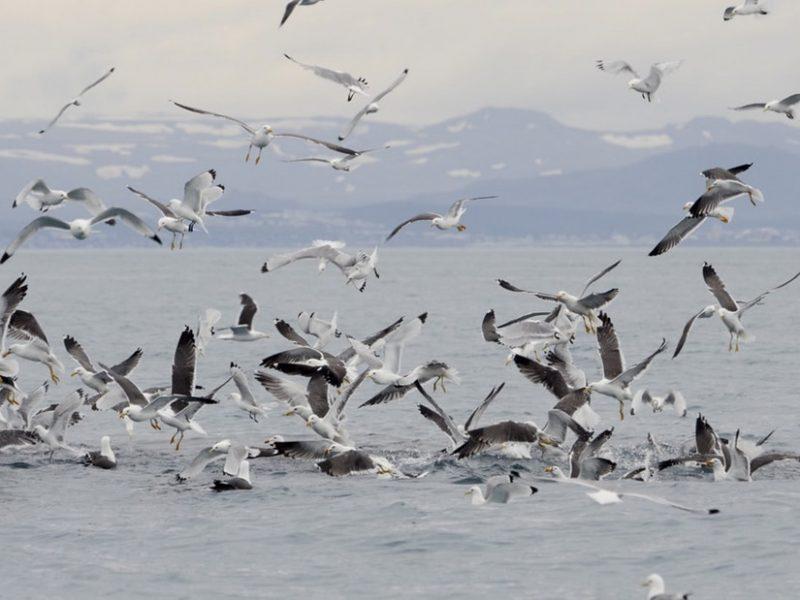 akureyri-classic-whale-watching-05