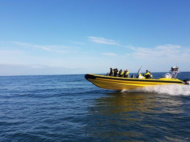 black-beach-rib-boat-safari-05