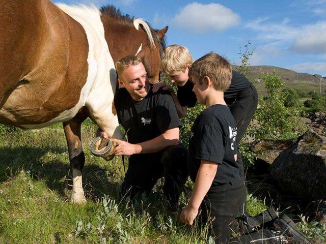 Meet the Icelandic horses