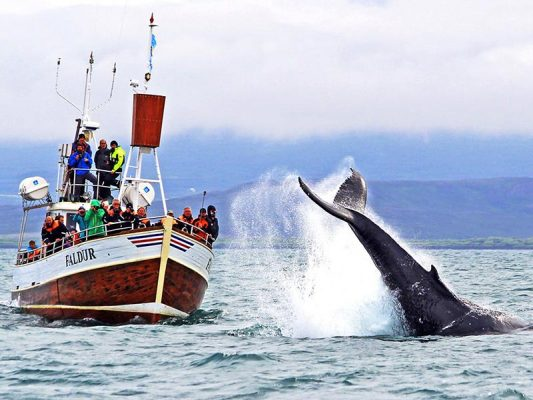 no-one-is-safe-from-the-splash-zone-of-a-humpback-whale
