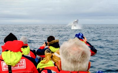 Whale and puffin watching by RIB Boat from Reykjavík