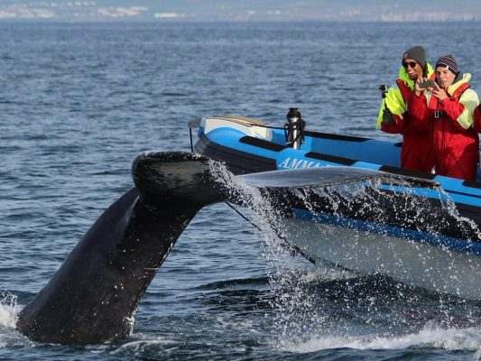 whale watching tour on a rib boat from húsavík
