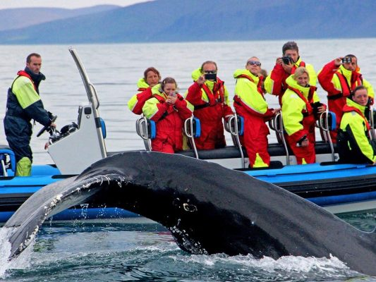 rib-boat-husavik-whale-watching-tour-02