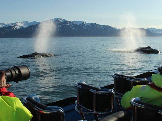 rib-boat-husavik-whale-watching-tour-06