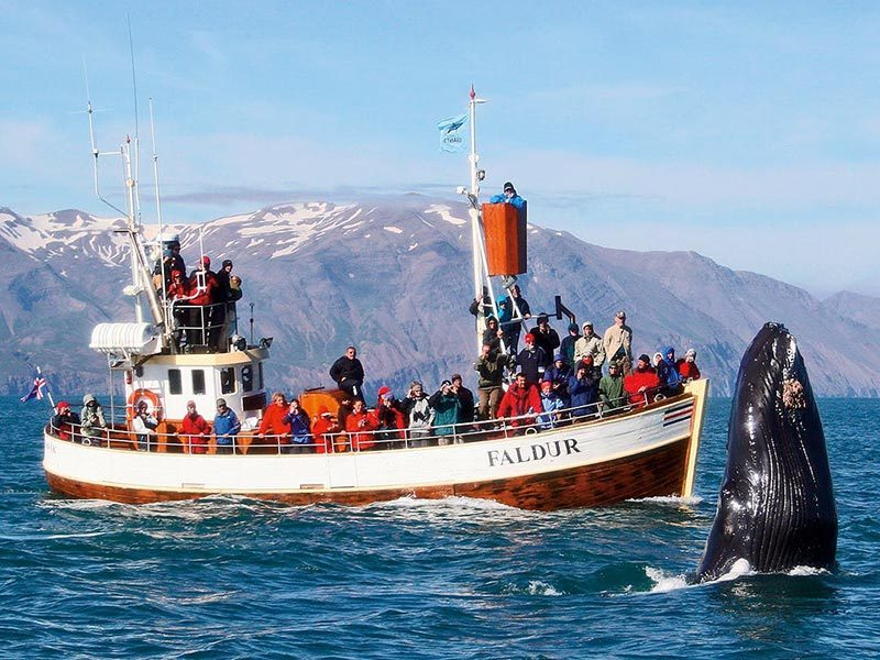 spy-hopping-humpbacks-are-as-interested-in-you-as-you-are-them-1