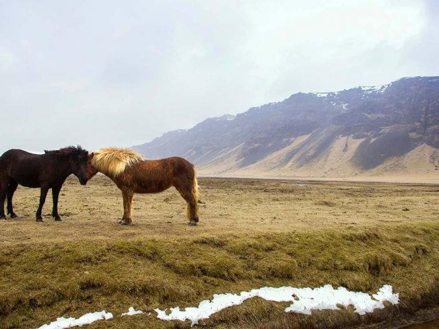 Trail rides in West Iceland