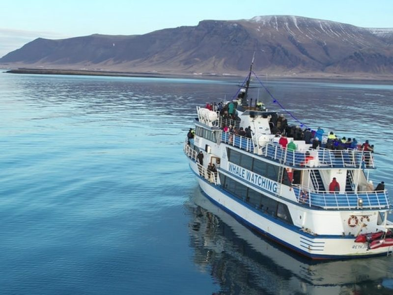 whale-watching-reykjavik-07