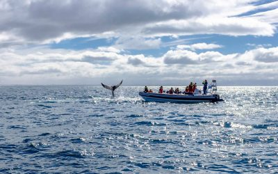 Whale watching RIB boat tour from Reykjavík