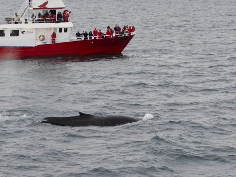 winter-whale-watching-reykjavik-03