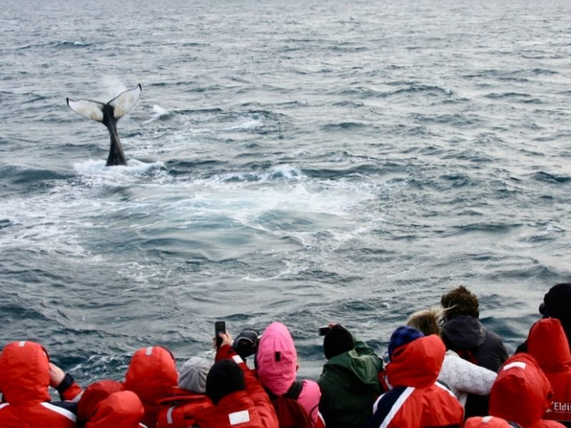winter-whale-watching-reykjavik-04